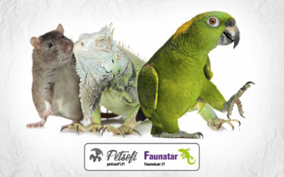 Faunatar and Petsofi provide a free online veterinary question session for rodents, rabbits, birds and terrarium animals on September 12th from 6pm to 8pm.