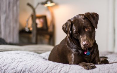 Help canine epilepsy research – join the test group!